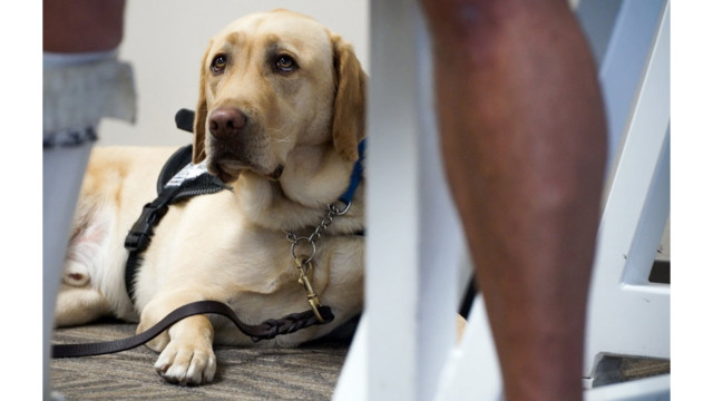 Delta Releases New Rules For Service And Support Animals