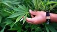 Mexico's drug decriminalization could impact U.S. businesses