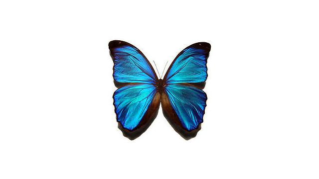 250px-Blue_10474640.jpg
