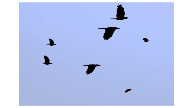 bird-migration-sxc-asifthebes_10753303.psd